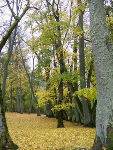 Herbststimmung (100_0444.JPG) wird geladen. Eindrucksvolle Fotos aus Lettland erwarten Sie.