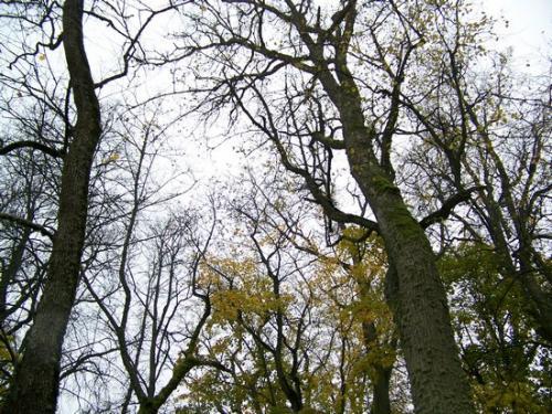 Herbststimmung (100_0446.JPG) wird geladen. Eindrucksvolle Fotos aus Lettland erwarten Sie.