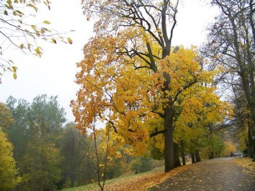 Herbststimmung (100_0448.JPG) wird geladen. Eindrucksvolle Fotos aus Lettland erwarten Sie.