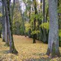 Herbststimmung (100_0445.JPG) Riga Lettland Baltikum