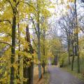 Herbststimmung (100_0447.JPG) Riga Lettland Baltikum