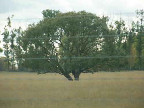Herbstwald (100_0086.JPG) wird geladen. Eindrucksvolle Fotos aus Lettland erwarten Sie.