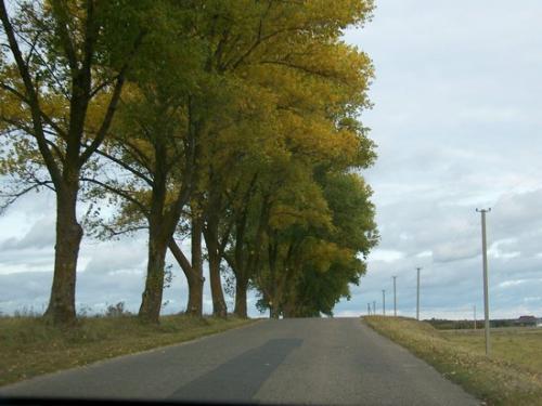 Herbstwald (100_0098.JPG) wird geladen. Eindrucksvolle Fotos aus Lettland erwarten Sie.