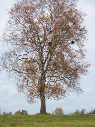 Herbstwald (100_0101.JPG) wird geladen. Eindrucksvolle Fotos aus Lettland erwarten Sie.