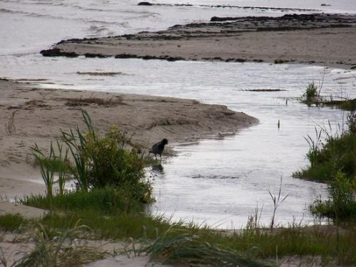 Ostseekueste (100_0646.JPG) wird geladen. Eindrucksvolle Fotos aus Lettland erwarten Sie.