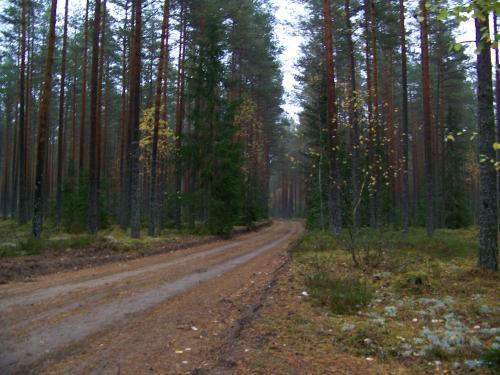 Schotterpisten (100_0571.JPG) wird geladen. Eindrucksvolle Fotos aus Lettland erwarten Sie.