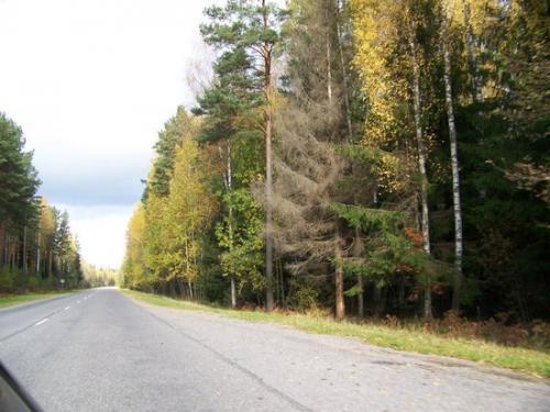 Strandstrasse (100_0689.JPG) wird geladen. Eindrucksvolle Fotos aus Lettland erwarten Sie.