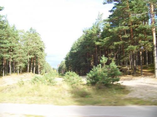 Strandwald (100_0631.JPG) wird geladen. Eindrucksvolle Fotos aus Lettland erwarten Sie.