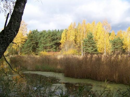 Strandwald (100_0636.JPG) wird geladen. Eindrucksvolle Fotos aus Lettland erwarten Sie.