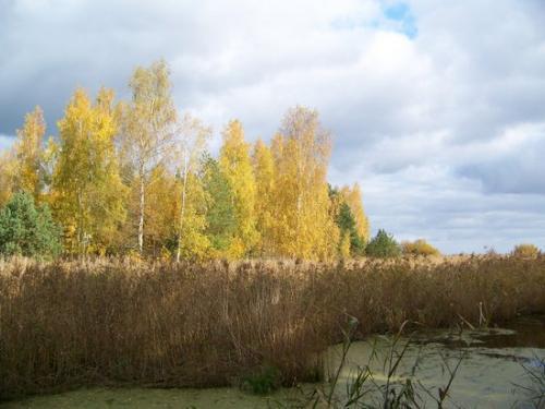 Strandwald (100_0637.JPG) wird geladen. Eindrucksvolle Fotos aus Lettland erwarten Sie.