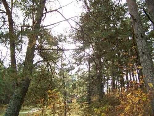 Strandwald (100_0638.JPG) wird geladen. Eindrucksvolle Fotos aus Lettland erwarten Sie.