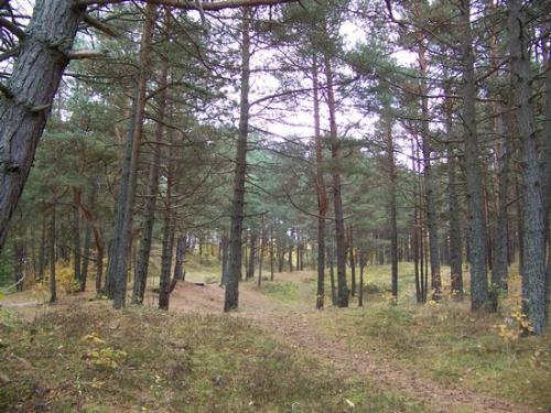 Strandwald (100_0642.JPG) wird geladen. Eindrucksvolle Fotos aus Lettland erwarten Sie.