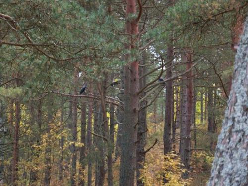Strandwald (100_0643.JPG) wird geladen. Eindrucksvolle Fotos aus Lettland erwarten Sie.