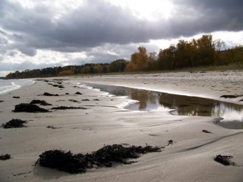 Strandwald (100_0672.JPG) wird geladen. Eindrucksvolle Fotos aus Lettland erwarten Sie.