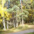 Strandwald (100_0632.JPG) Riga Lettland Baltikum