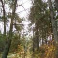 Strandwald (100_0638.JPG) Riga Lettland Baltikum